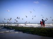 breakwater_gulls